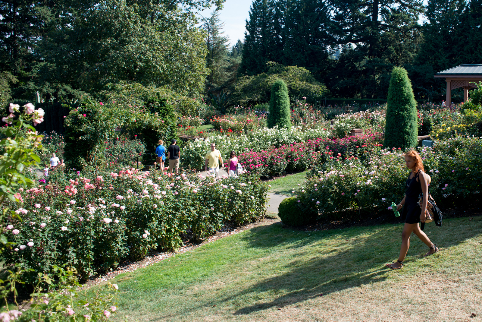 International Rose Test Garden in Portland, OR.